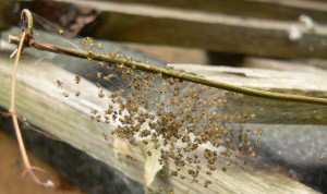 Baby spiders group and bit of wood